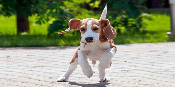 cachorro jugando en la calle