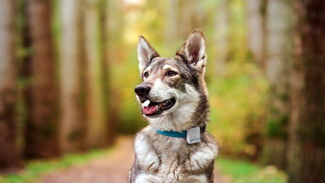 perro perdido en el monte