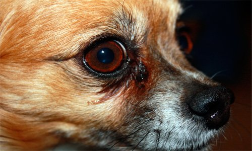 perro mirando