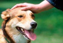 Persona acariciando a un perro con la mano