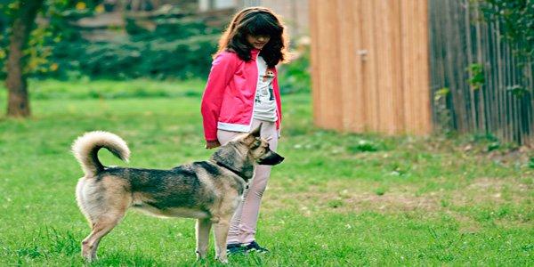 perro de terapia acompañando a niña