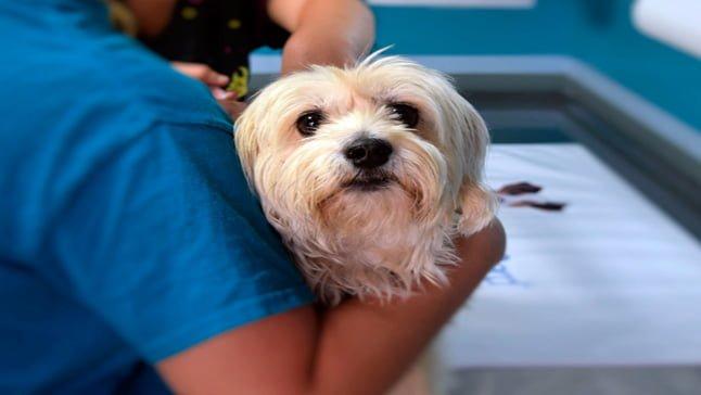 Maladies mortelles chez les chiens