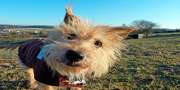 Noms mythologiques pour chiens