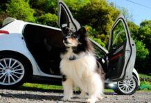 perro junto al coche
