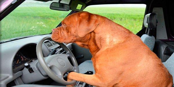 perro en interior de  coche