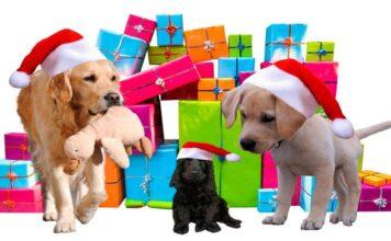 perros-con-regalos