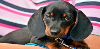 Cachorro recién adoptado en brazos