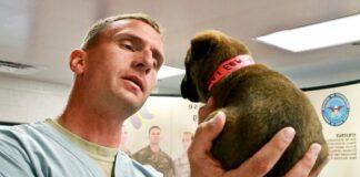 cachorro-en-el-veterinario-para-la-vacunación-contra-el-moquillo