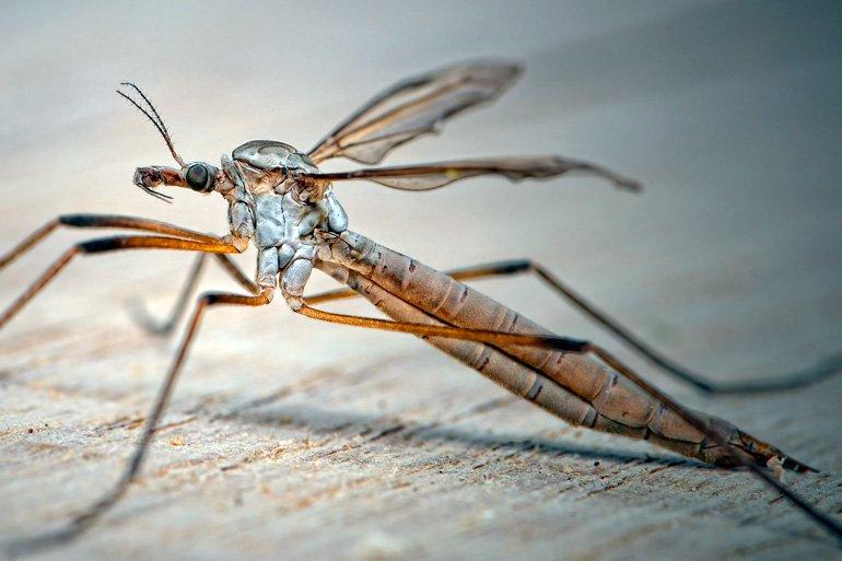 mosquito-dos