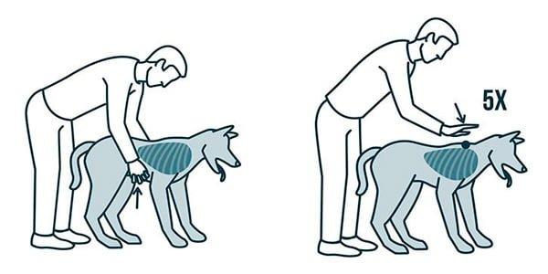 maniobra para ayudar a un perro atragantado