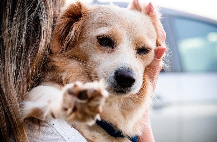 Comment faire la manœuvre de Heimlich sur un chien