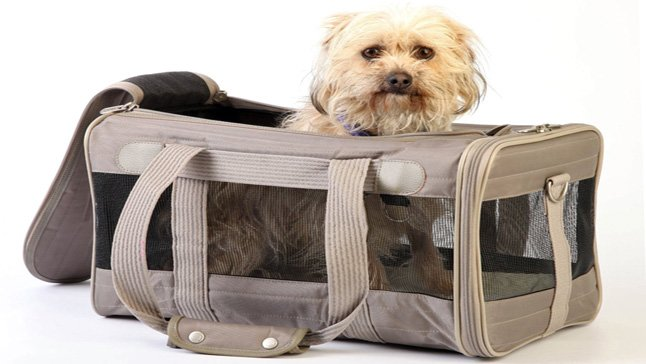 perro dentro de un transportín de tela