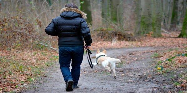 Perro paseando con su dueño por el bosque