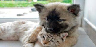 Cachorros de perro y gato jugando