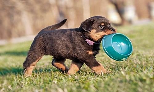 cachorro con comedero