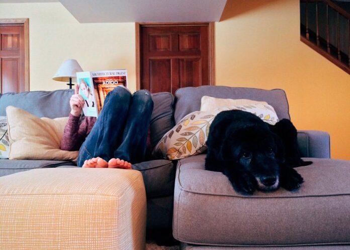 perro-dentro-de-casa