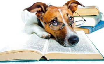 libro y perro