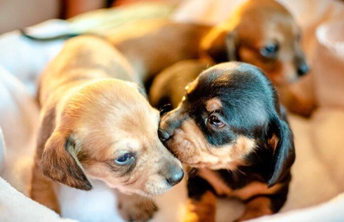 cachorros-recien-nacidos
