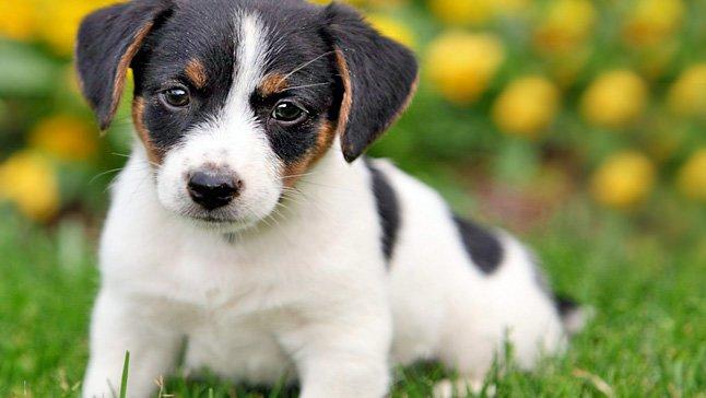 coronavirus en un perro