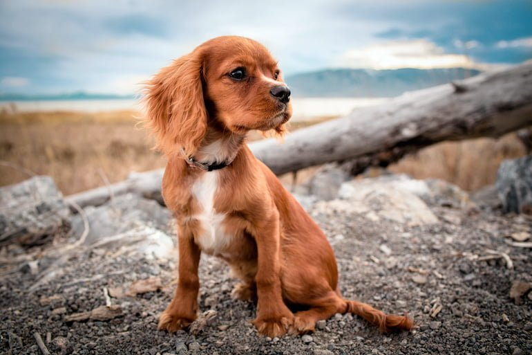 perro-de-seis-meses-de-vida
