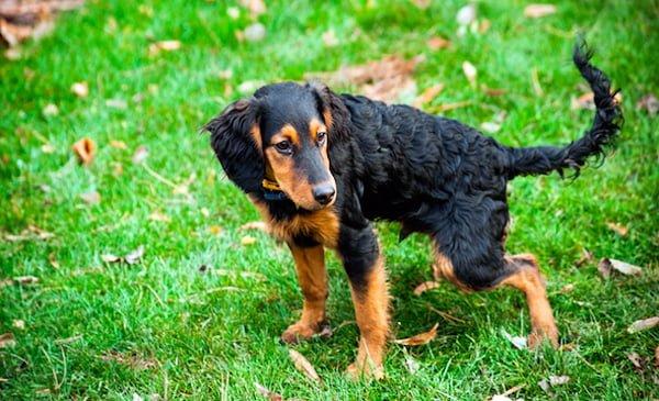 perro-orina-muchas-veces
