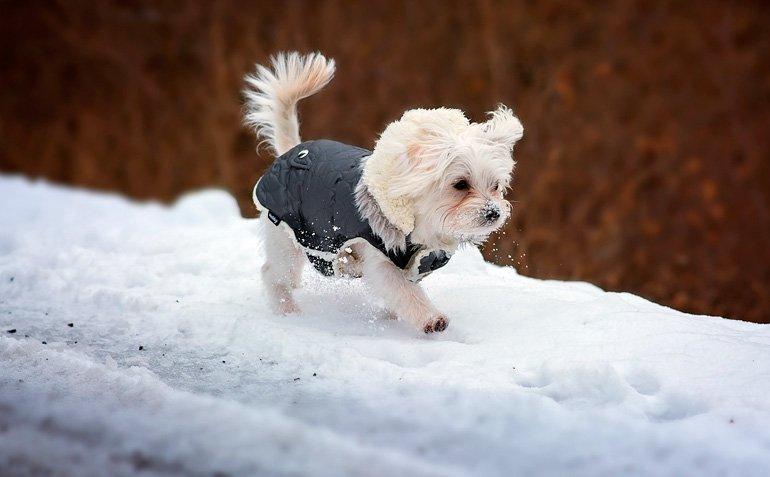 perro-pequeño-con-las-patitas-en-la-nieve