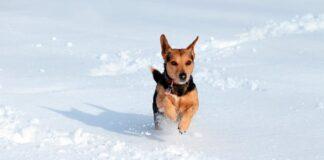 perro-saltando-en-la-nieve