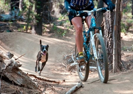 perro persiguiendo bici