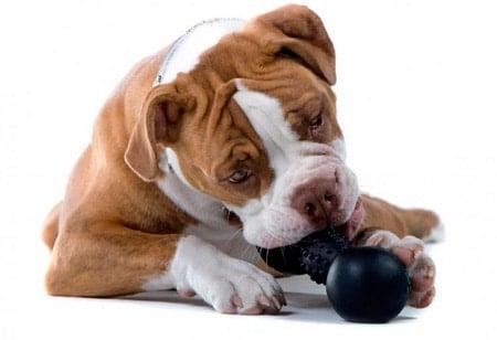 perro mordiendo su juguete