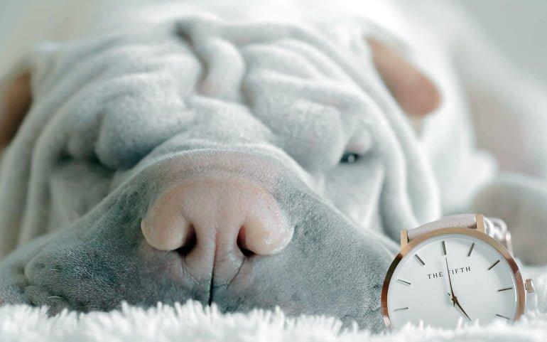 perro-con-un-reloj