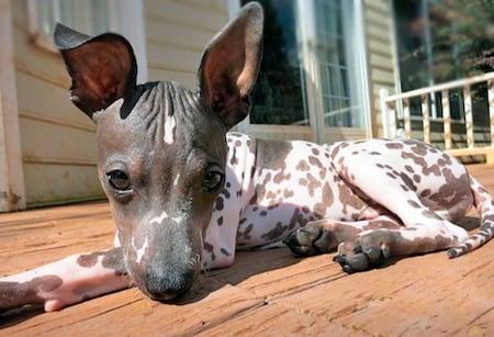 perrito al sol