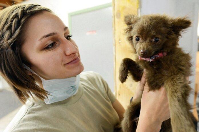 Effondrement trachéal canin