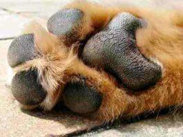 almohadilla de perro al sol