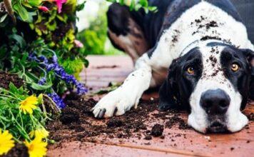 perro destrozando jardín