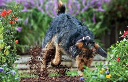 C mo evitar que mi perro haga agujeros en el jard n for Como evitar que salga hierba en el jardin
