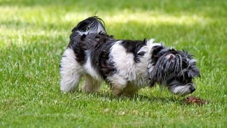 perro oliendo caca