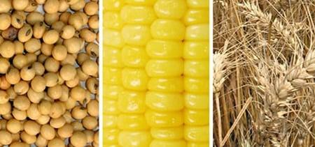 principales cereales alergenos