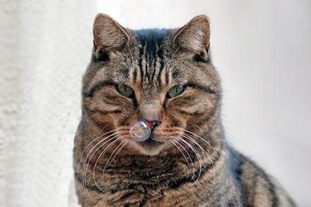 gato con mocos