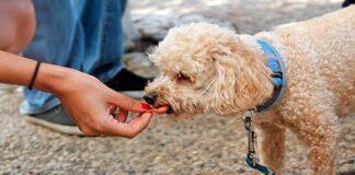 perro-comiendo-galleta