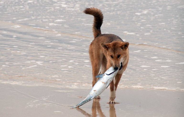 perro-comiendo-pescado