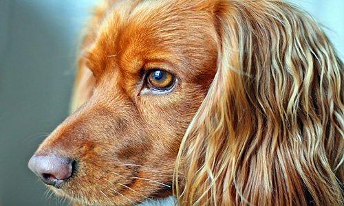 perro-con-pelo-brillante