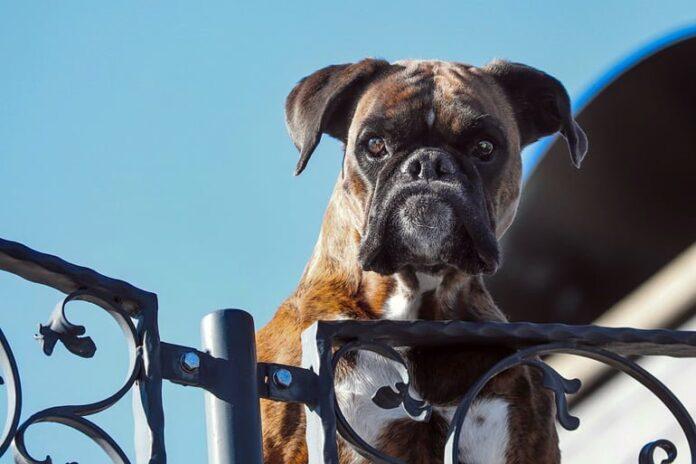 perro-guardían