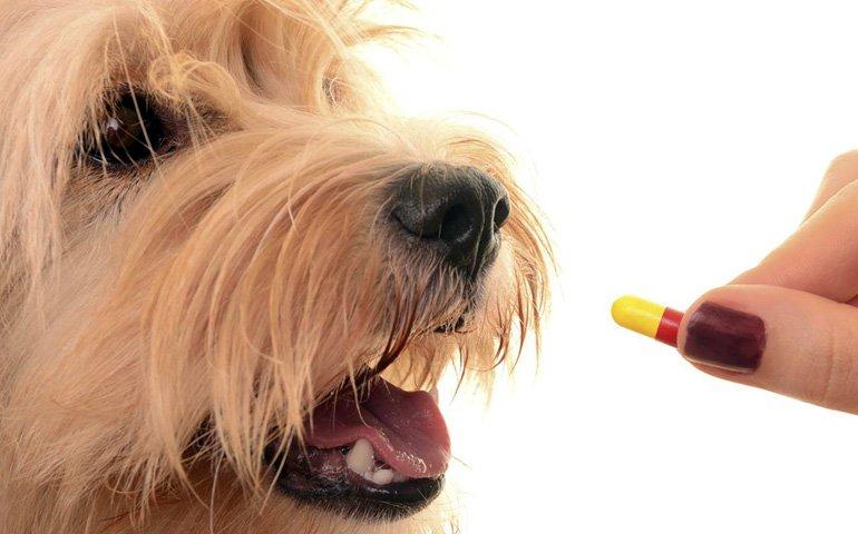 perro-tomando-pastilla