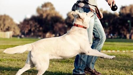 perro con adiestrador canino