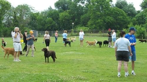 socializando a un pitbull en un parque para perros