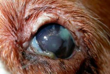 infeccion en los ojos sintomas