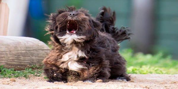 agresividad perro miedo