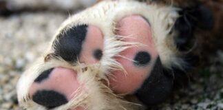 almohadillas-canas-de-un-perro