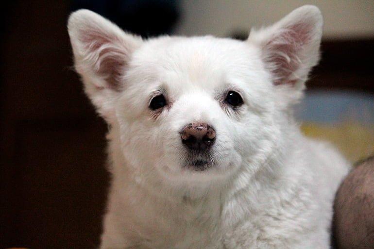 cachorro-de-perro-sin-vacunas