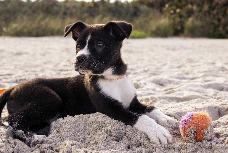 cachorro-jugando-en-la-arena-de-la-playa